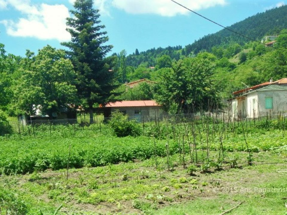 Ορεινός λαχανόκηπος 2015_06_24_13-00