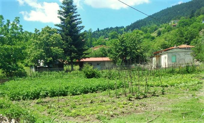 Ορεινός λαχανόκηπος