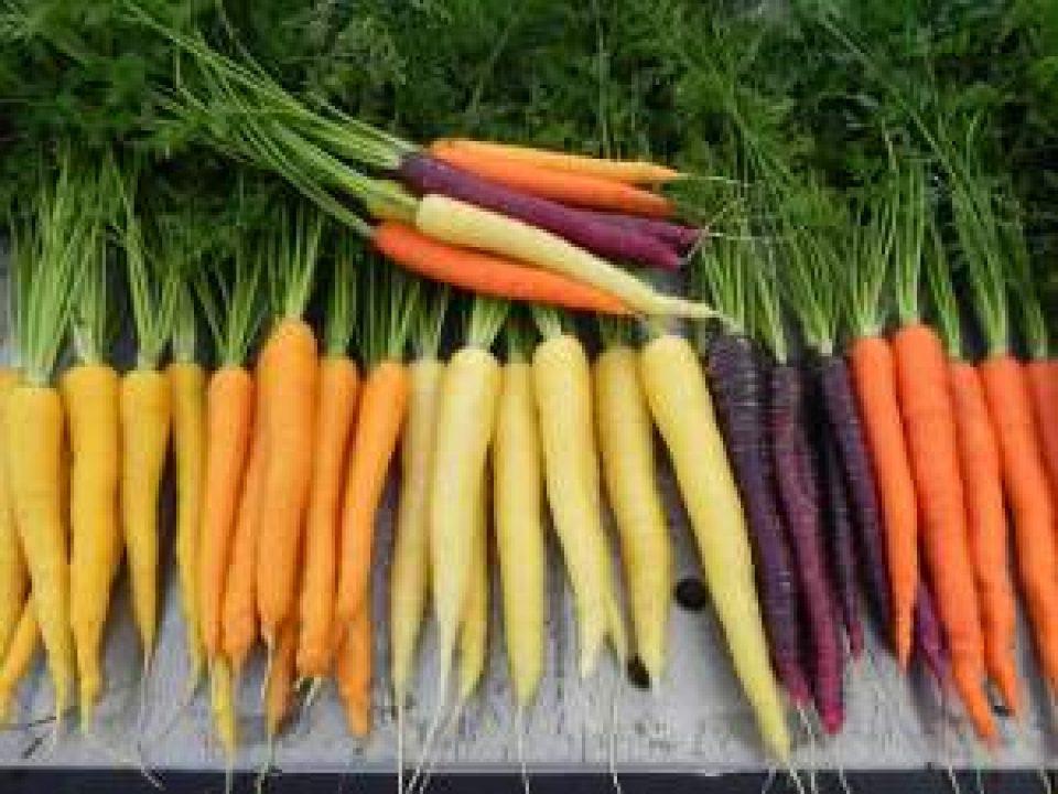 Carrot, Yellow Pak, Sherbert, Cream Pak, Purplesnax, Sugarsnax 54, 110512 (14)