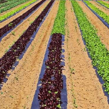 Red meets green Suzies Farm Flickr 370x370