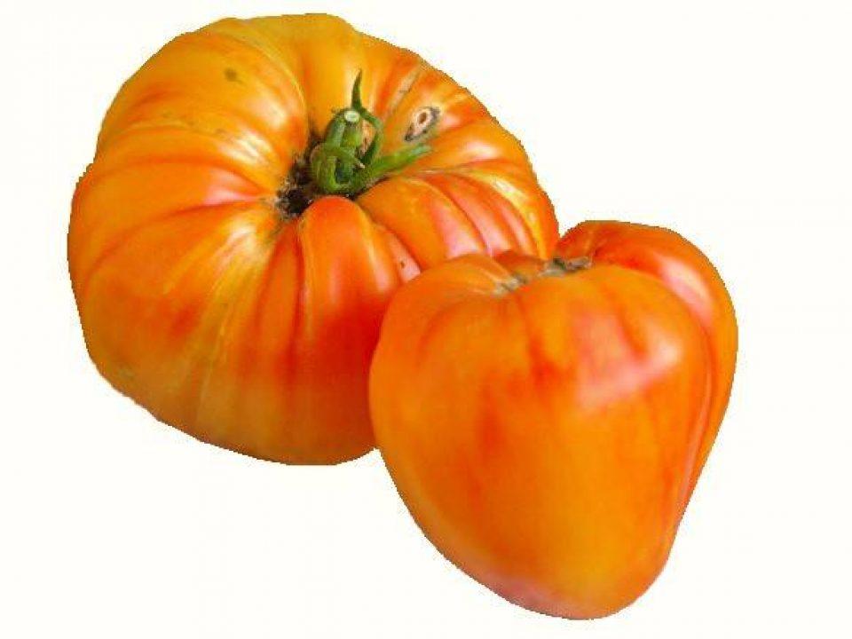 orange russian tomato-3-2011